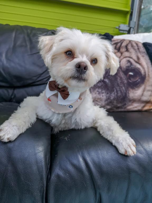 Thank DOG I Am Out Rescue Society – To Save As Many Dogs As Possible